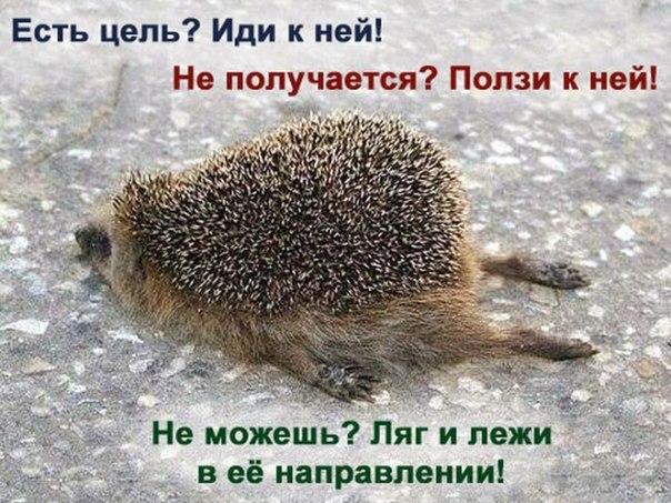 http://cs606824.vk.me/v606824037/6bb2/U0ZUCWTi4ns.jpg